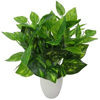 観葉植物でストレスを解消する花